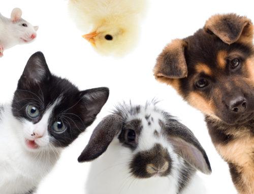 Bénédiction des animaux
